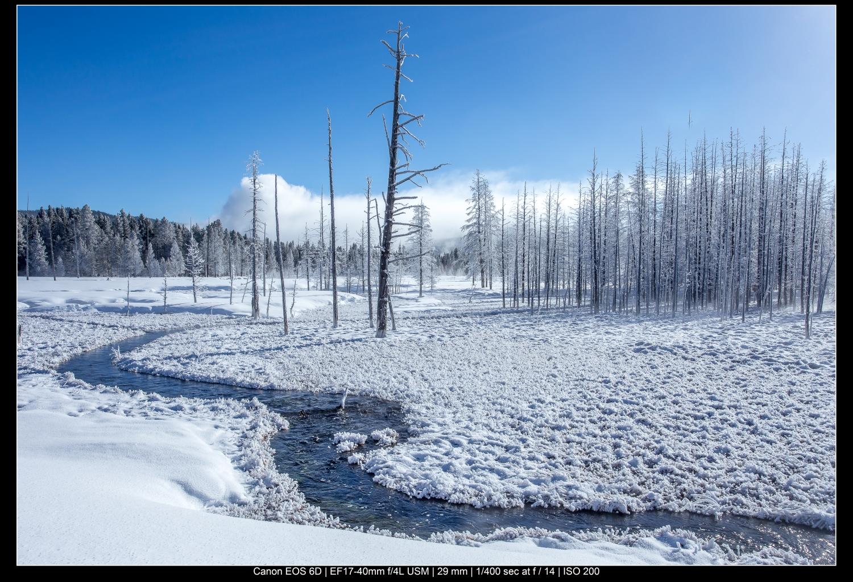 Árvores de Yellowstone