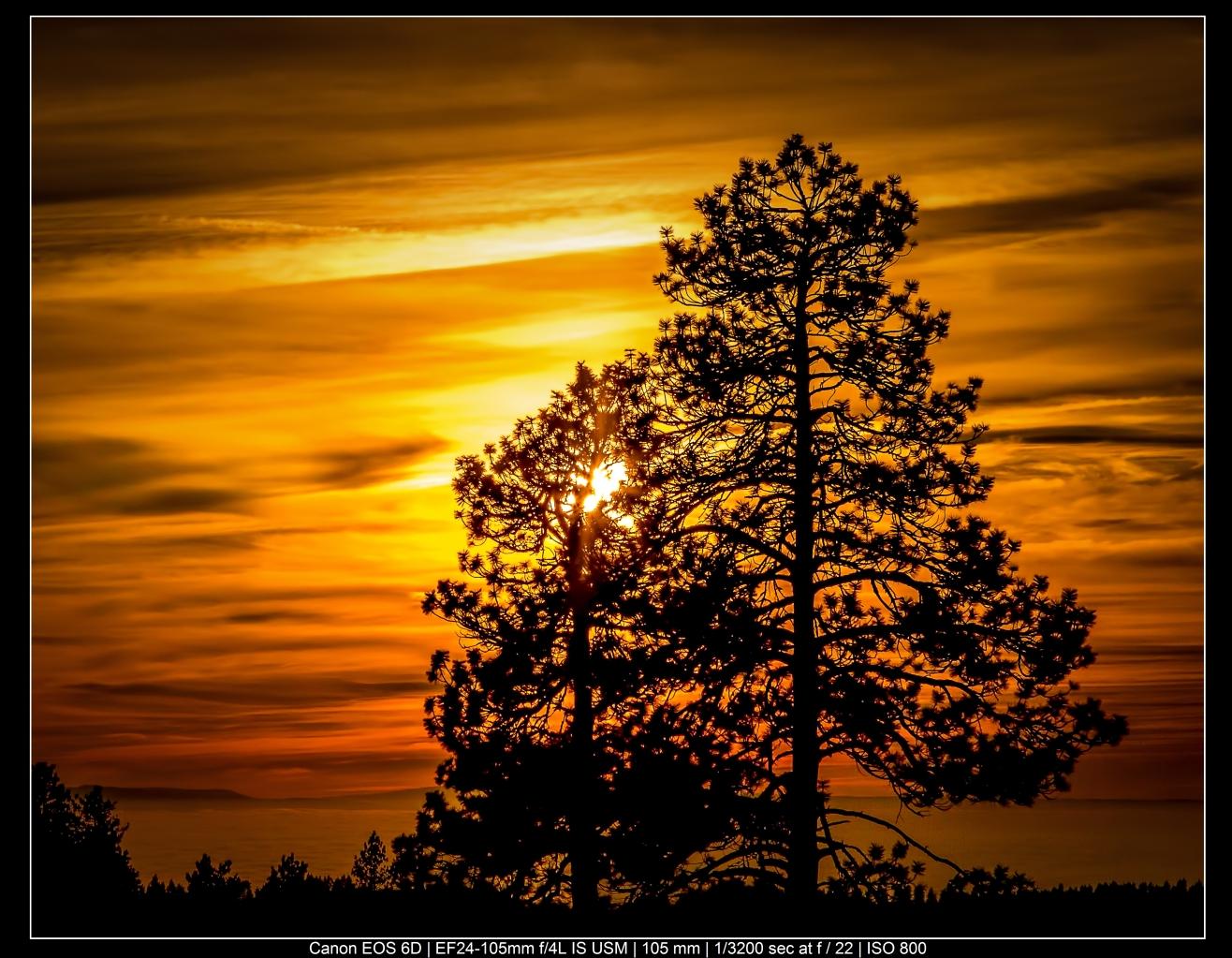 Fotografia de paisagens com silhuetas de árvores coloridas