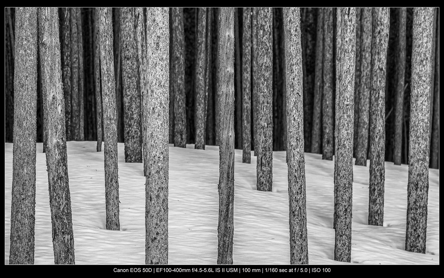 Focus stacking trees