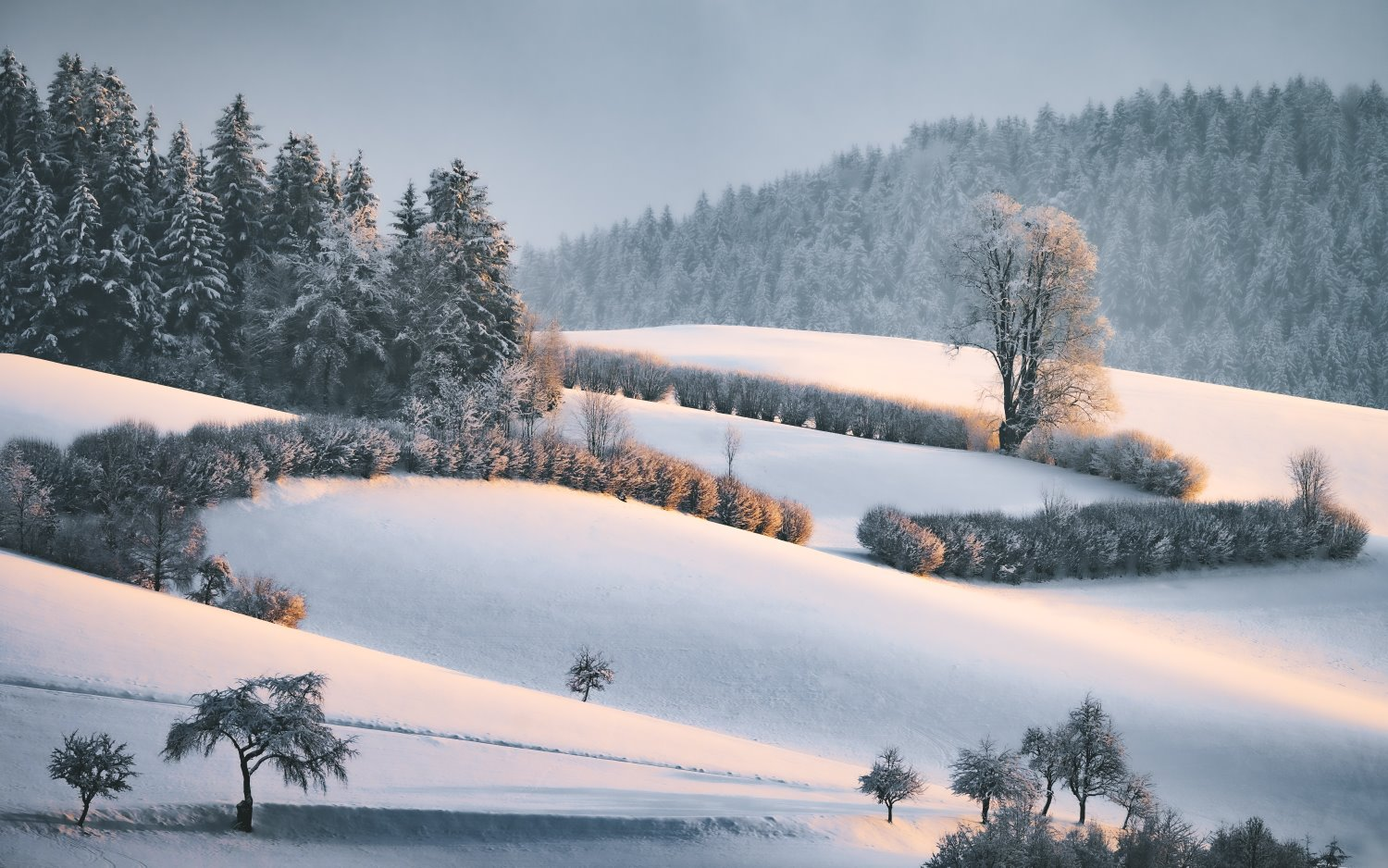 landscape photography tips snow at golden hour