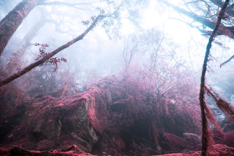 infrared forest scene photo manipulation ideas