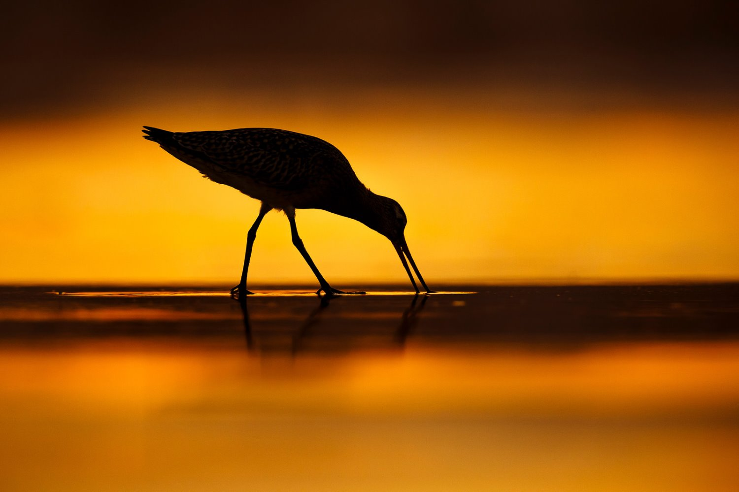 Bird Photographer of the Year finalist