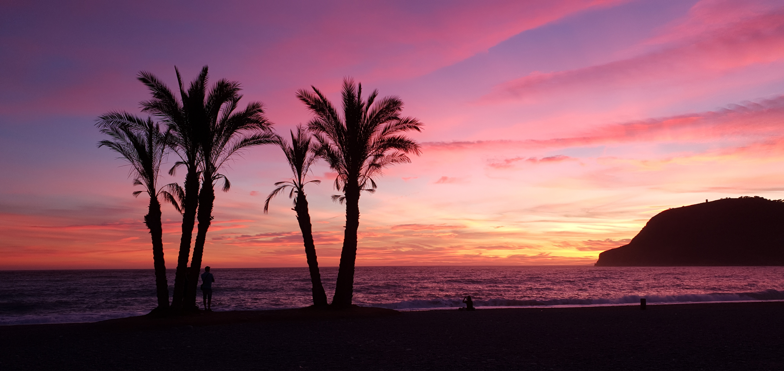 pôr do sol com silhuetas de palmeiras