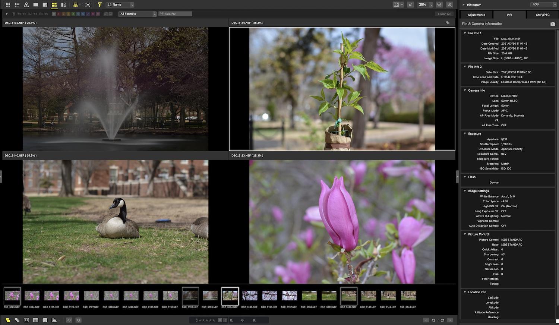 Nikon NX Studio Review 4-Up View