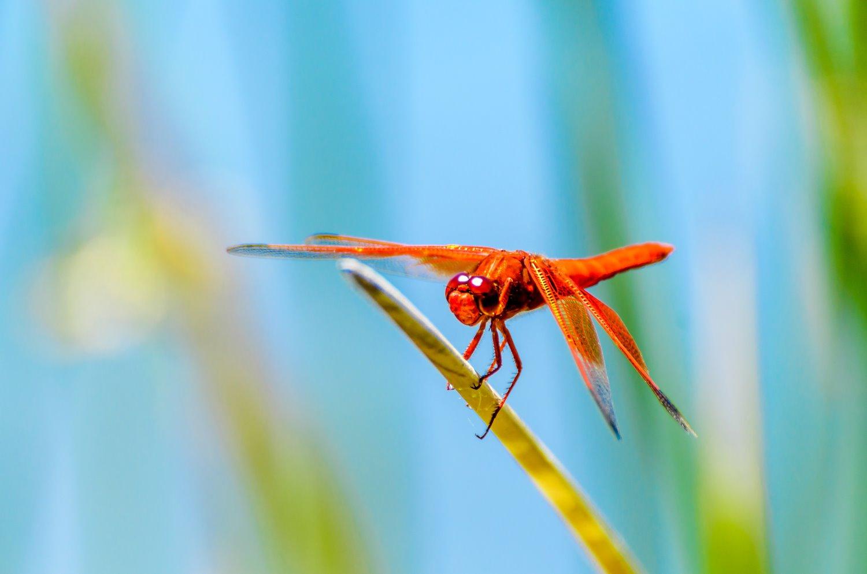understanding light dragonfly on grass