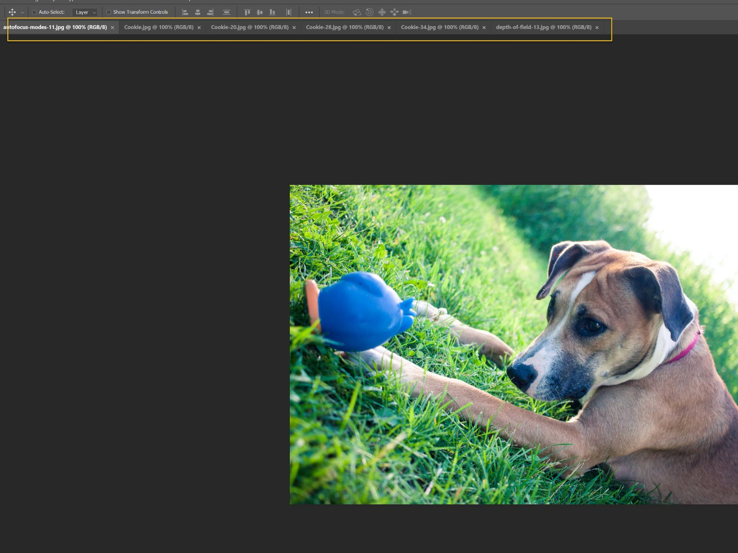 the collage images open in Photoshop