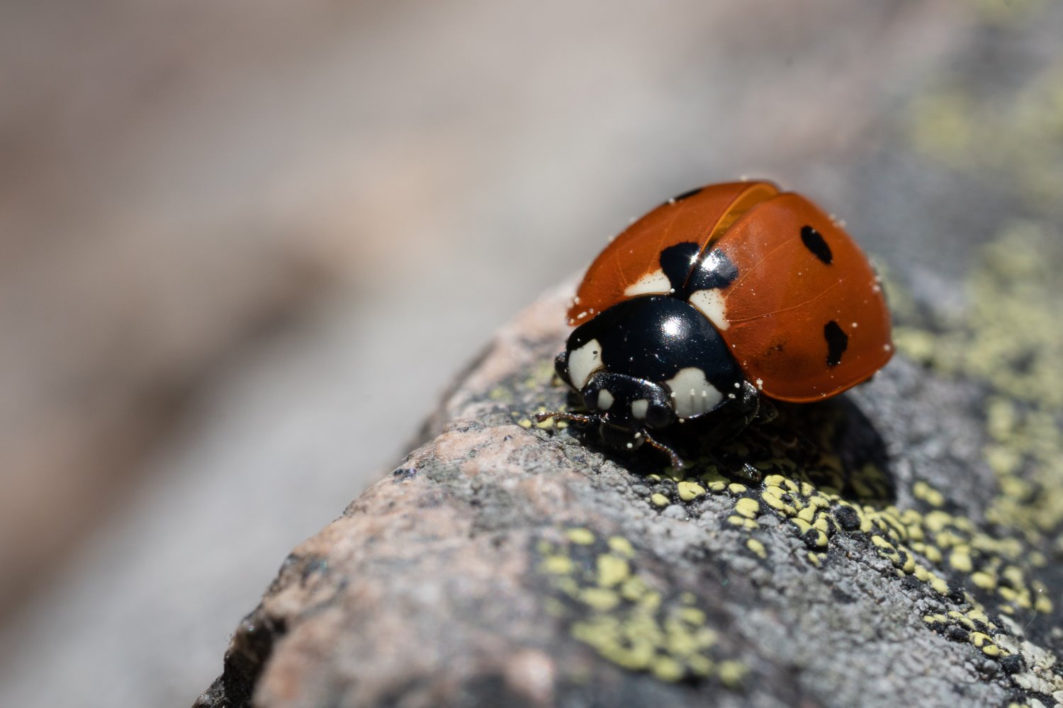 macro photography tips for point and shoot cameras