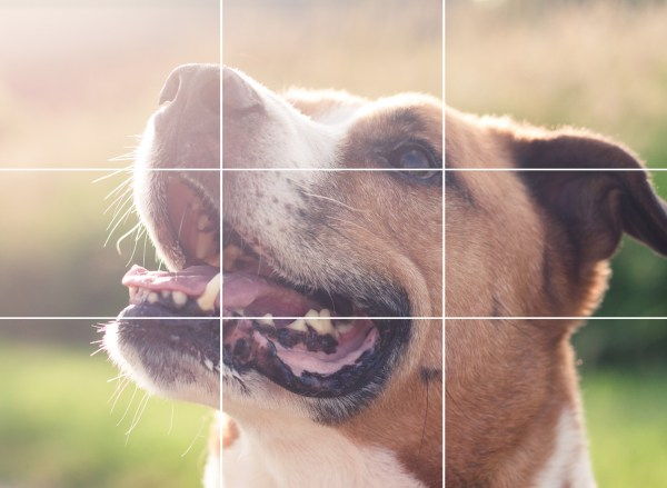dog with rule of thirds gridline