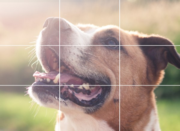 Rule of Thirds in Photography: The Essential Guide