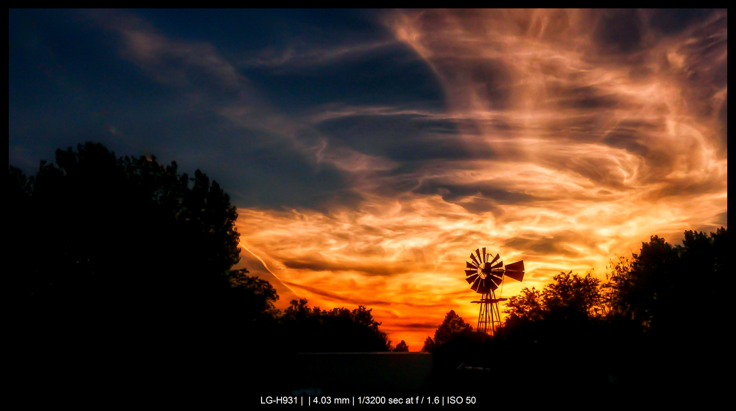 trees and windmill at sunset