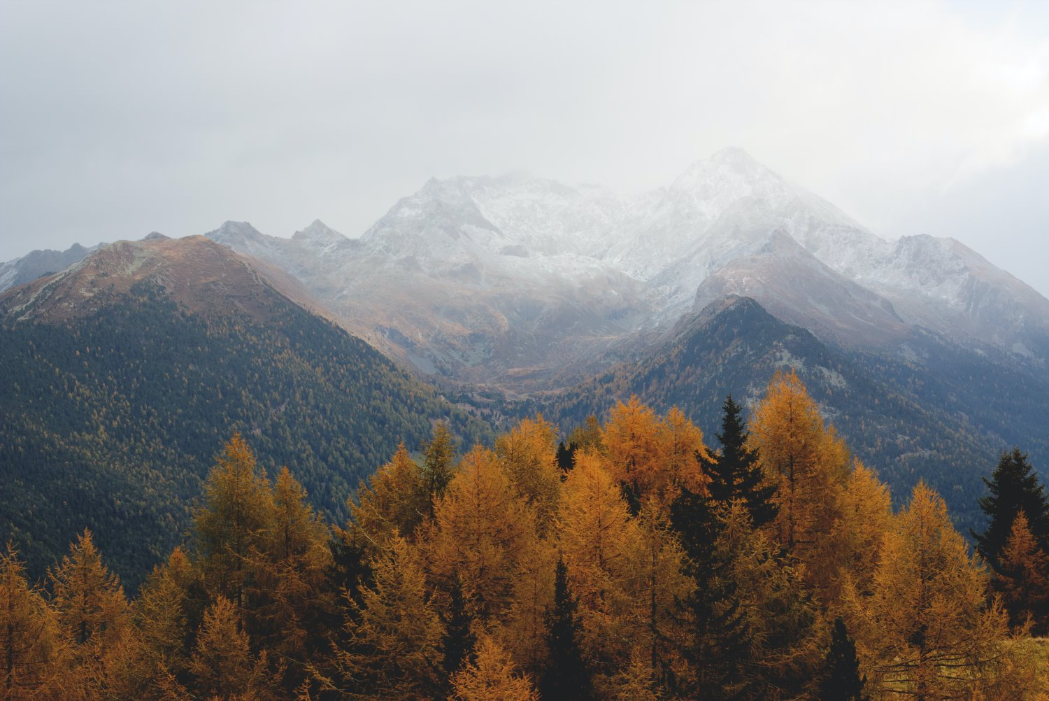 autumn trees with mountains in the background