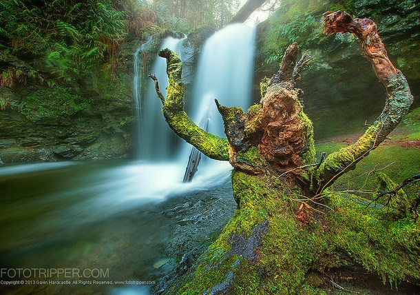 Image: Sony A7R Example shot from one exposure – 'Ferocious Stump' By Gavin Hardca...