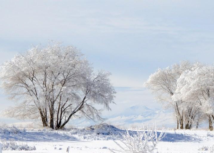 Image: By USFWS Mountain-Prairie