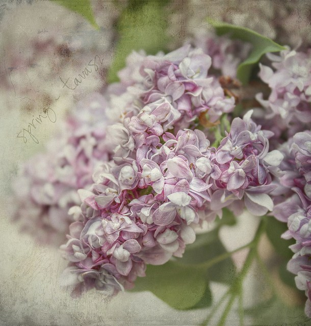 Image: By kataaca