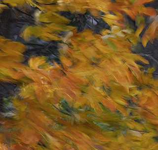 Photographing Autumn Leaves – Panning Technique