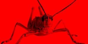 EXTERNE LINKS: Grasshopper