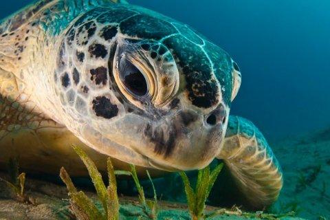 16 de junio: Día Mundial de las Tortugas Marinas