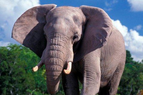 12 de agosto: Día Mundial del Elefante