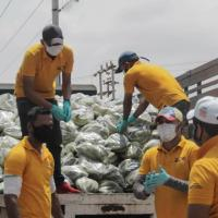 Alcaldía Bolivariana de Maracaibo comenzó la distribución de 70 toneladas de plátano