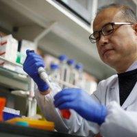 Científicos chinos encuentran anticuerpos «efectivos» en la búsqueda de un tratamiento para el COVID-19