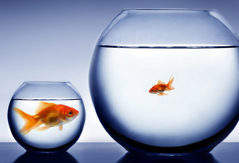 niche-market-building-audience-segmentation