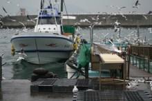 関西の春の訪れ:イカナゴ漁(解禁)の様子を写真撮影05