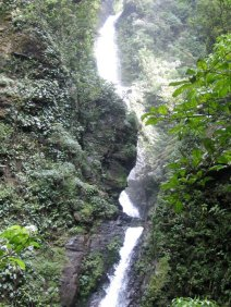 There are many streams and waterfalls in the cloud forest.