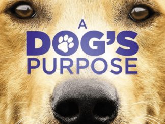 A DOG'S PURPOSE HD GOOGLE PLAY DIGITAL COPY MOVIE CODE (DIRECT IN TO GOOGLE PLAY) CANADA