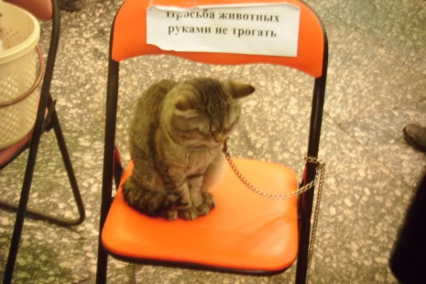 chained up cat at the great moscow state circus