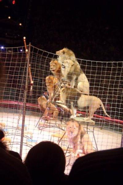 lyon pyramid at the bolshoi circus