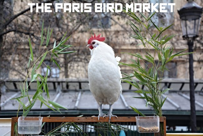 paris bird market