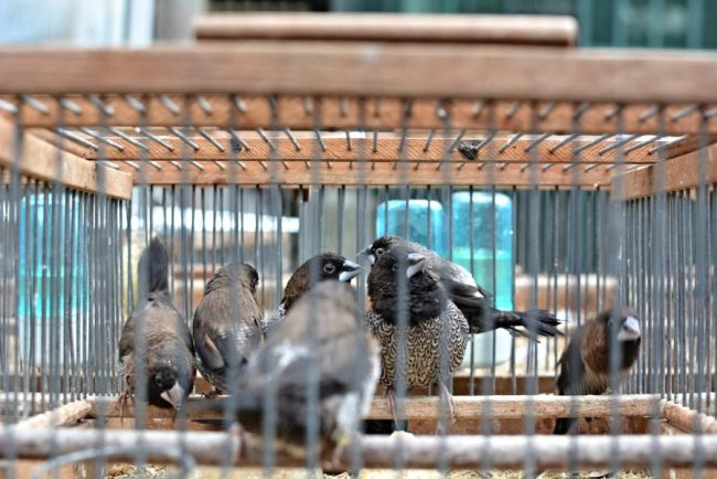 The Paris Bird Market