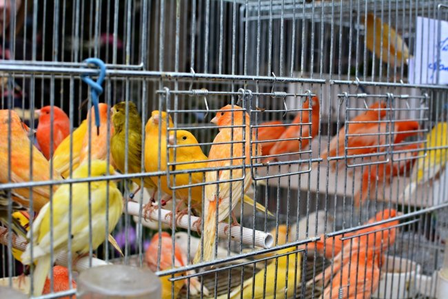 paris bird market france caged red canaries Marche aux Oiseaux