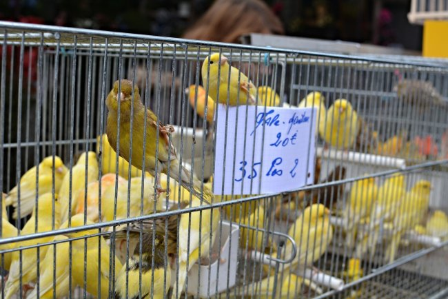 paris bird market france caged yellow canaries Marche aux Oiseaux