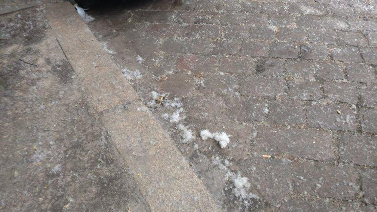 pappelsamen pappelflaum pappelschnee sommer schnee moabit berlin