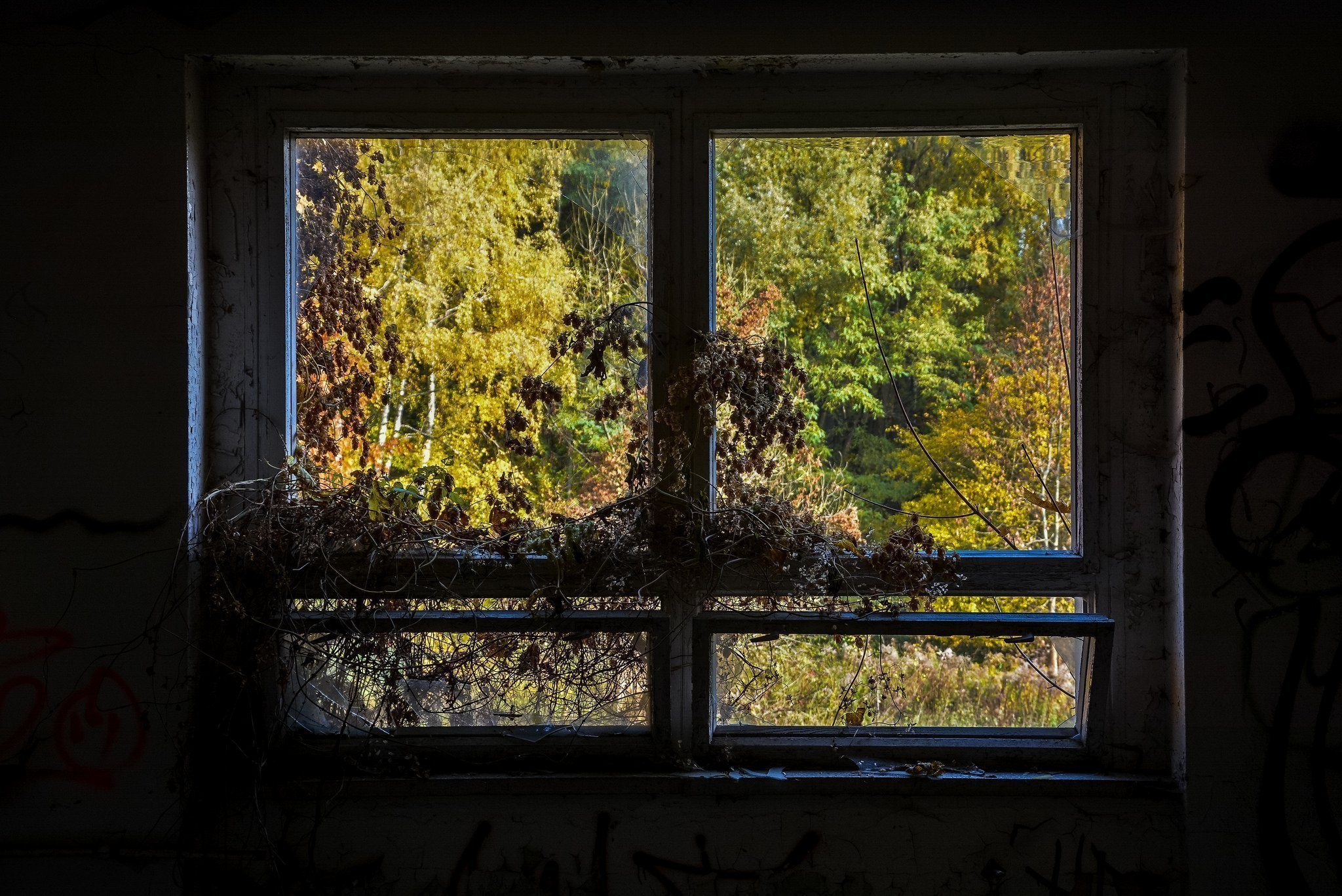 abandoned hospital berlin verlassenes krankenhaus lost places urbex ruins germany overgrown window