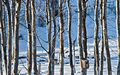 Winter Trees Vertical | ID 11166
