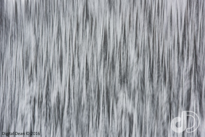 Winter Trees Abstract
