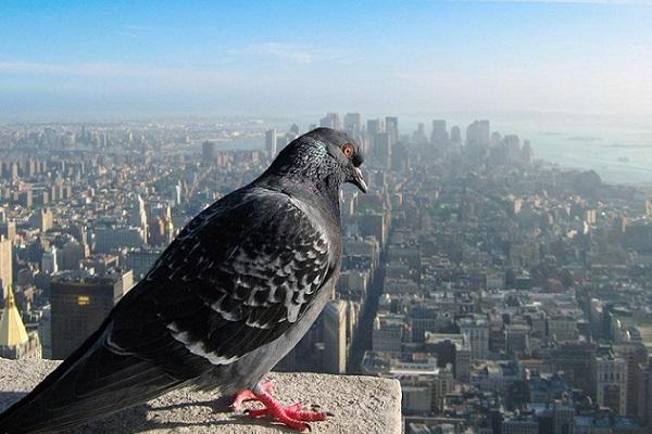 Dünya şehirlerinin kuşbakışı resimleri