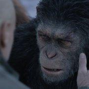 Planet Der Affen - Survival 3D - Szenenbild