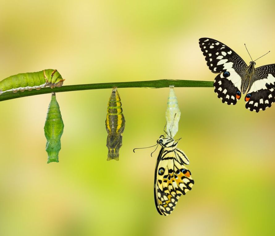 Photo showing the life-stages of a butterfly.