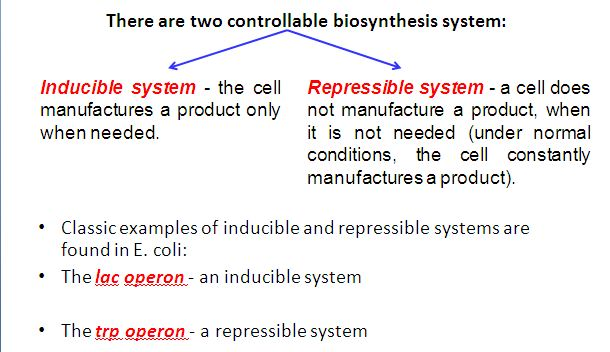 Inducible and repressible system