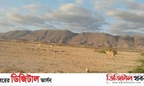ওমানের সবুজ শহরের নাম সালালাহ-Digital Khobor
