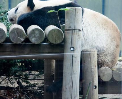 パンダを観に上野動物園へ