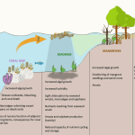 Causes of Eutrophication and Algal bloom   UPSC – IAS