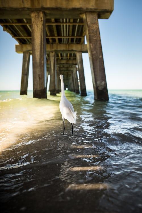 bird under pier in naples beach