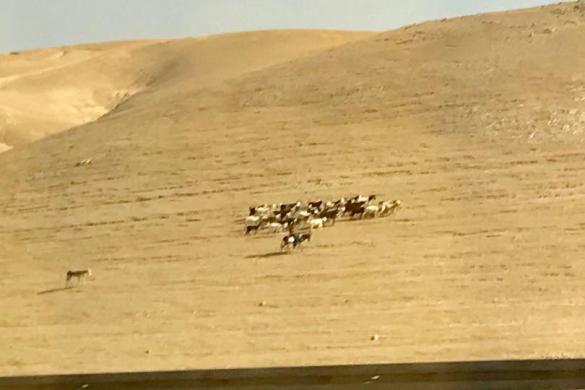 Holy Land day 7: Bethany, Qumran, Judean Desert