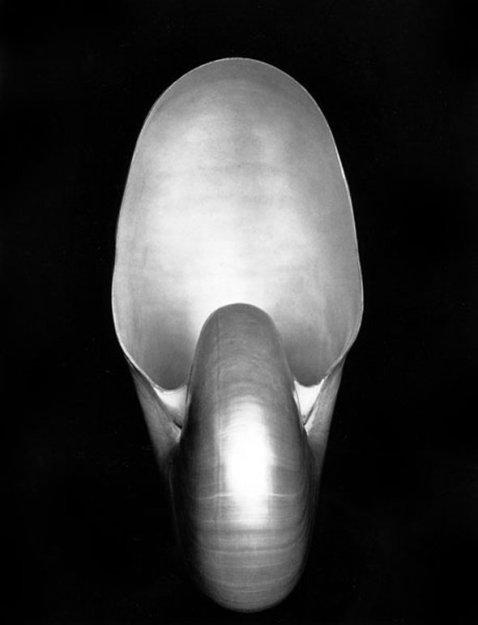 Nautilus - (1927) by Edward Weston