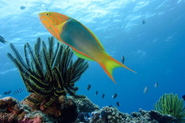 Nikon SB-N10 Underwater Speedlight sample image 01