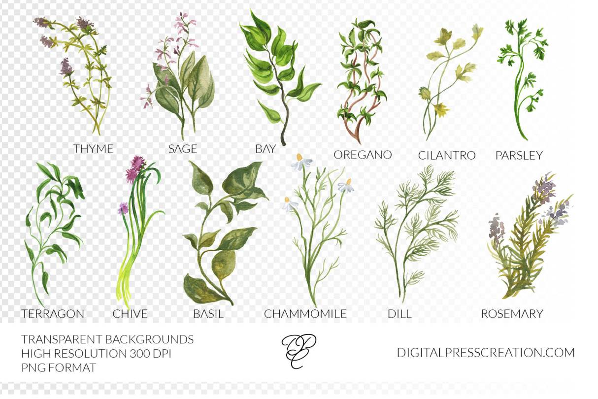 Watercolor Herbs transparency clipart